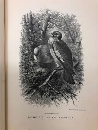 The Bird World: Described with Pen and Pencil