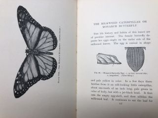 Life Histories of American Insects