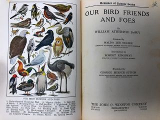 Our Bird Friends and Foes (Romance of Science Series)